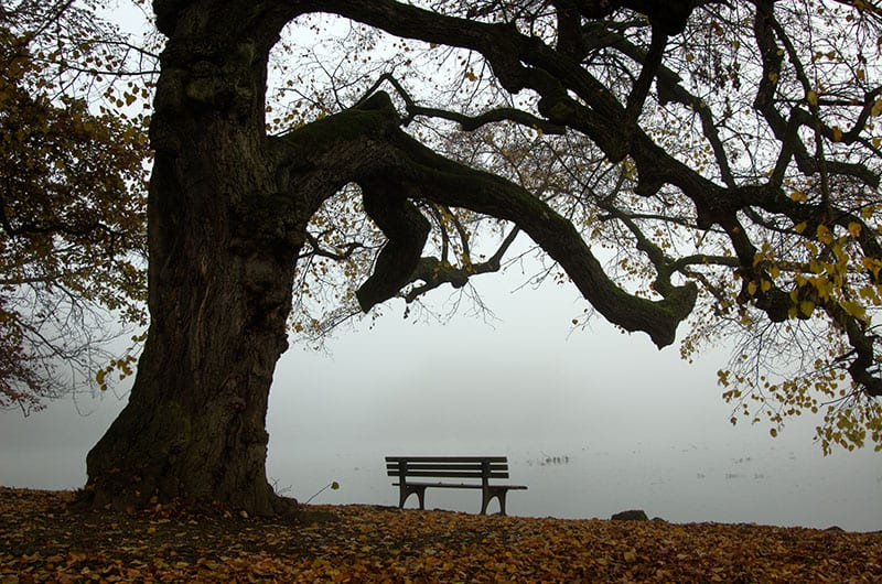 Park bench ona little lake under an old tree